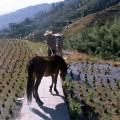 chine2011_360
